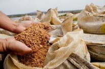 Cadeia produtiva do arroz enfrenta crise com ótimos resultados