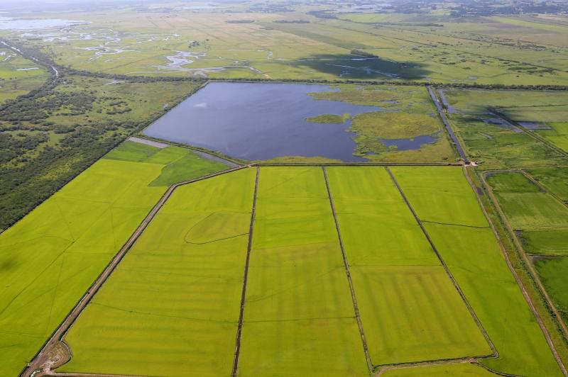 Levantamento do Irga abrangeu seis regiões produtoras no Estado