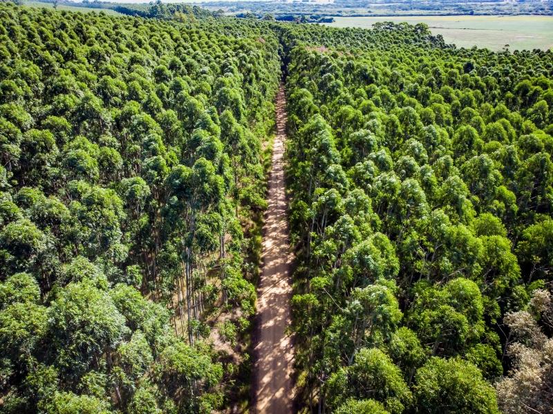 A silvicultura é uma atividade baseada na utilização de árvores manejadas para produzir madeira