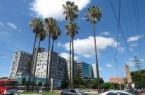 A palmeira da Califórnia...