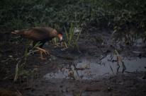 Setembro tem recorde histórico de queimadas no Pantanal