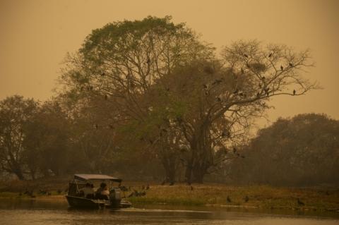 Senadores querem legislação para o Pantanal pronta em até 45 dias