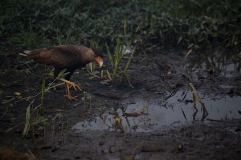 Brasil tem 3.300 espécies de animais e plantas ameaçadas, revela IBGE