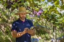 Tecnologia auxilia na produção de uva em cidades da serra gaúcha