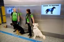 Depois da Finlândia, Reino Unido treina cães para detectar Covid-19 em aeroportos