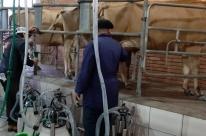 Criadores de Jerseyencaminham projeto de controle leiteiro aogoverno federal