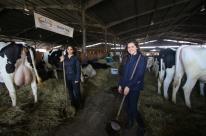 Função na Expointer: carregadoras de penico para vaca leiteira