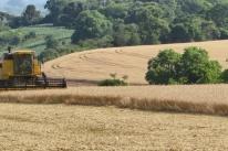 Começa a colheita do trigo no RS