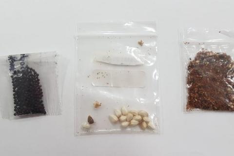 Agricultura identifica fungos, bactérias e pragas em pacotes de sementes misteriosas