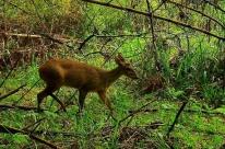 Reserva ajuda na preservação de espécies em Passo Fundo