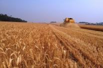 Colheita do trigo alcança 2% da áreaplantada no RS