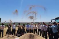 Aberta oficialmente a colheita do trigo no Rio Grande do Sul
