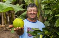 Municípios gaúchos se destacam entre os que mais incentivam a agroecologia no Brasil