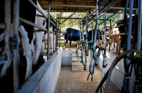 Menos demanda e custos elevados no setor lácteo em 2021