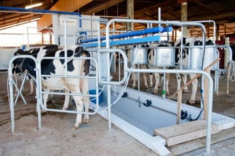 Preço do leite captado em outubro, e pago em novembro, deve registrar queda