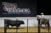 Angus bate recorde e vende touro a R$ 734,4 mil