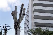 Liminar suspende corte de Guapuruvu em Porto Alegre