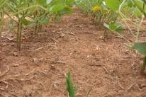 Entidades rurais e Famurs pedem apoio para amenizar danos com a estiagem