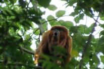 Estudo avalia espécies de animais em área de Morro Reuter