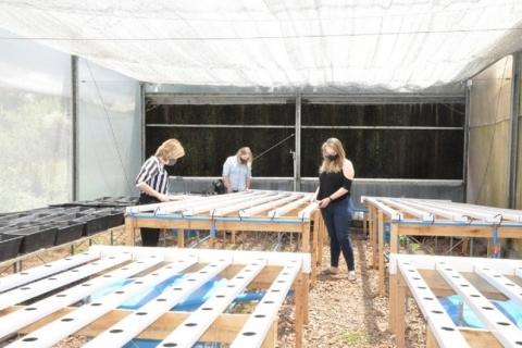 Tecnologia auxilia no cultivo de hortaliças em Passo Fundo
