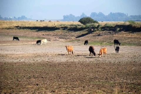 Danos da estiagem avançam também sobre a pecuária