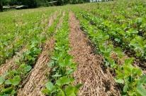 Chuvas animam produtores gaúchos que sofrem com a estiagem