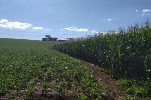 Clima favorável atenua condições do milho no RS
