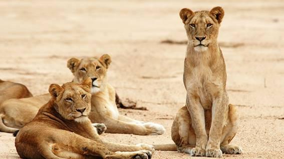 Canal estreia nesta quarta-feira (13) três episódios em sequência de 'Predadores africanos'