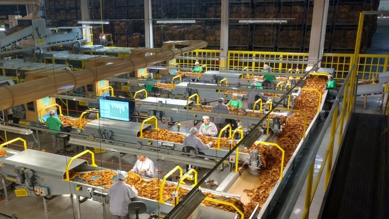 Novo produto sairá da planta de Santa Cruz do Sul e deve chegar ao mercado no final do primeiro trimestre