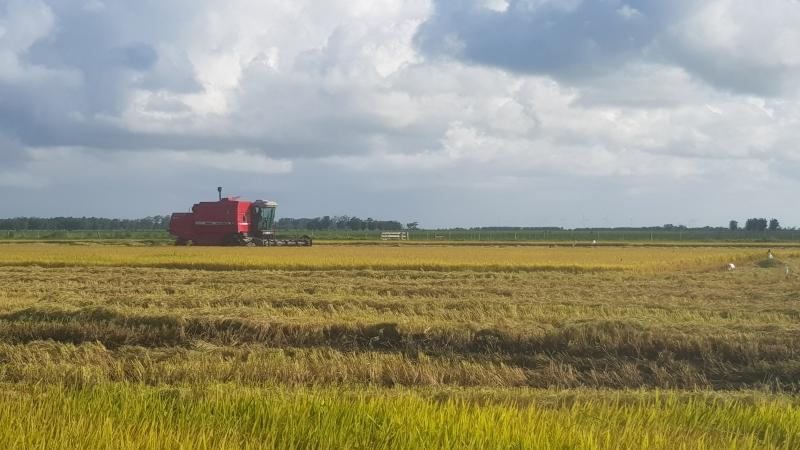 Agricultor que segue as dicas do Zarc está menos sujeito a riscos