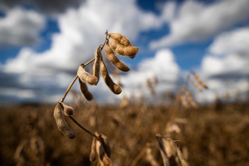 De acordo com o IBGE, o Brasil deve colher novo recorde de soja em 2021