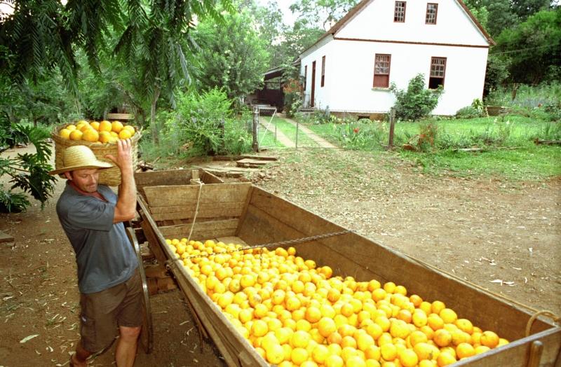 Secretaria de Agricultura estima que cultivo de laranja pode somar até 25 mil hectares em 2021