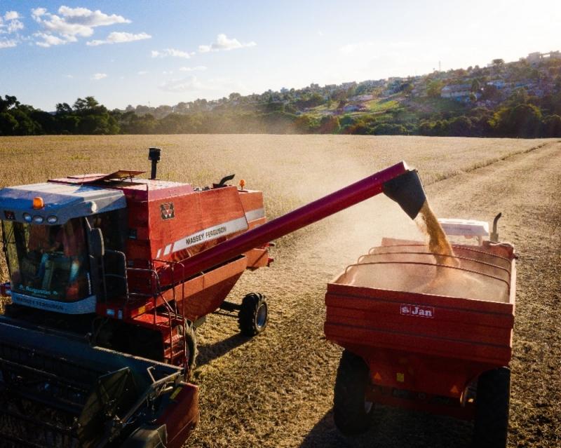 Resultados na soja e no milho foram melhores aos do ano anterior