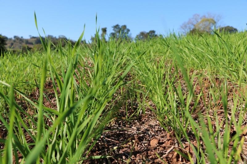 Boas condições climáticas fizeram com que a semeadura avançasse na última semana