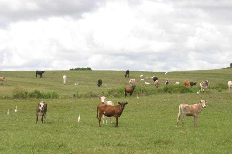 Preço de animas jovens também subiu e reduz lucros dos criadores que destinam gado para abate