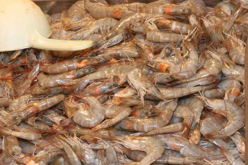 A mudança foi feita após pedido do secretário da Pesca, Jorge Seif Júnior