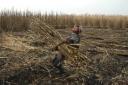 Comitê internacional deve analisar trabalho escravo
