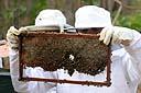 Festimel retorna a Balneário Pinhal e propõe debate sobre a apicultura no RS