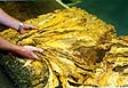 Produtores de tabaco temem novas restrições