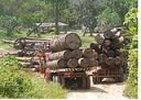 MPF aponta 2,3 mil responsáveis por desmatamento ilegal na Amazônia