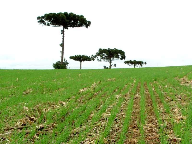 Condições dos solos dificultaram o desenvolvimento das plantas