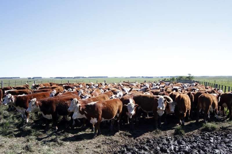 Até o mês de maio, Brasil deixou de exportar o equivalente a 60 mil toneladas de carne bovina