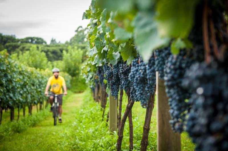 Região da Uva e Vinho, Hortênsias, Litoral Norte e Capital se destacam no desenvolvimento de ações
