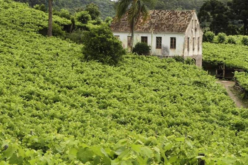 Vale dos Vinhedos, na Serra, é principal destino enoturístico brasileiro