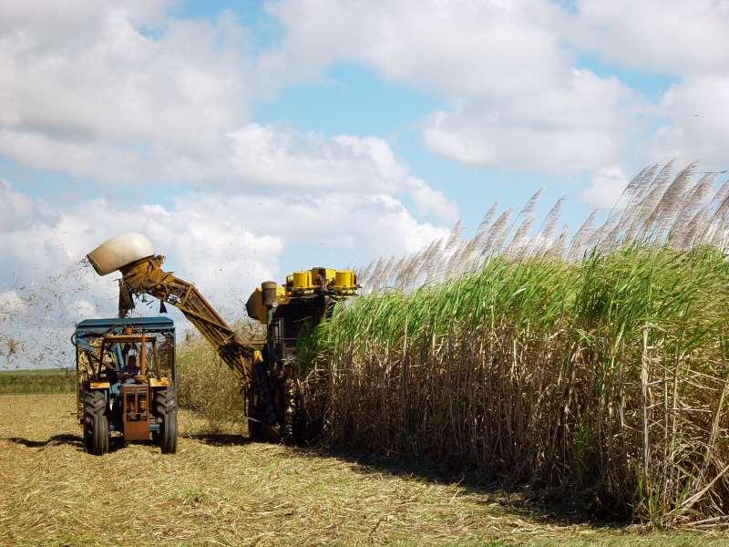 Programa prevê R$ 4 bilhões para o aumento da produção de cana