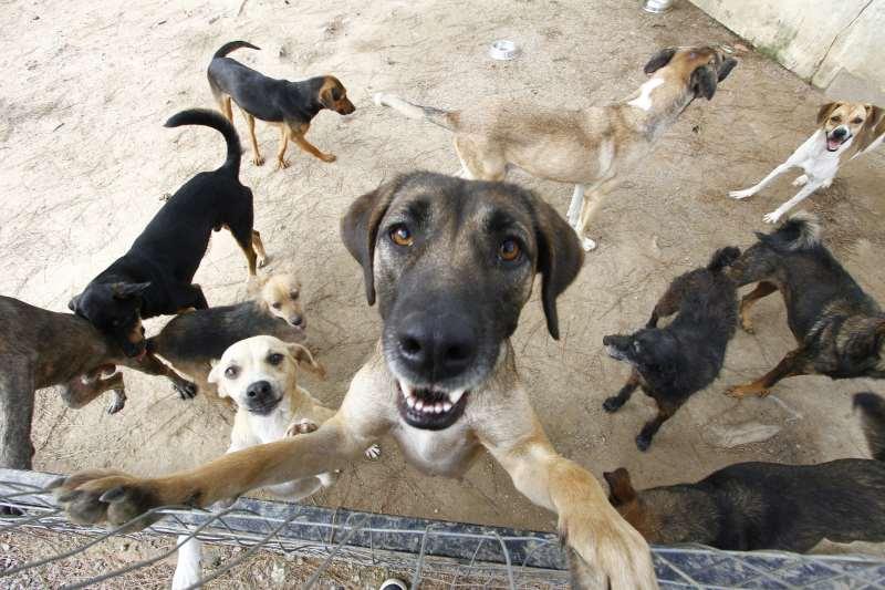 Matéria sobre o abandono de animais, que aumenta na época das férias. Fotos do animais da Seda. Cães, cão, cachorro
