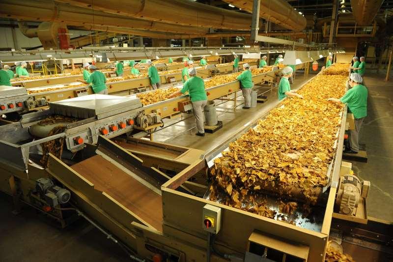 Exportações de tabaco caíram -19,4%
