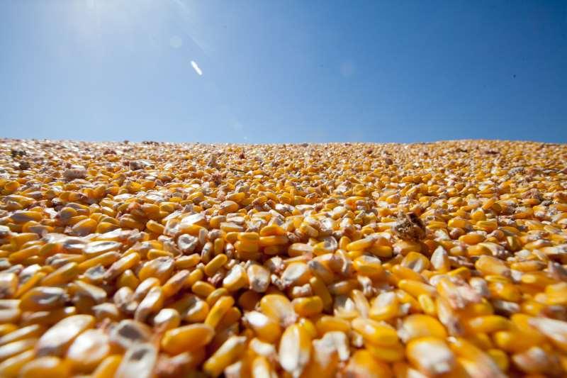 Programa beneficiará 49.950 produtores rurais, com um total de 143.193 sacas de migro e de sorgo