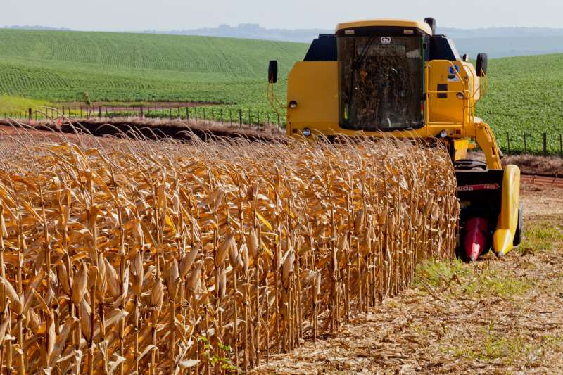 Rendimento das áreas colhidas varia de 8,5 a 12 toneladas por hectare