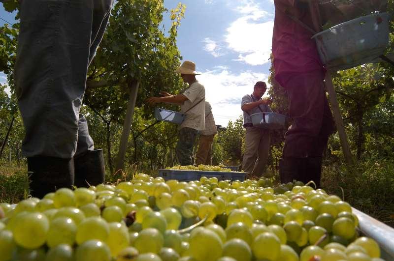 Mobilização de mão de obra para safra de verão alavancou contratações
